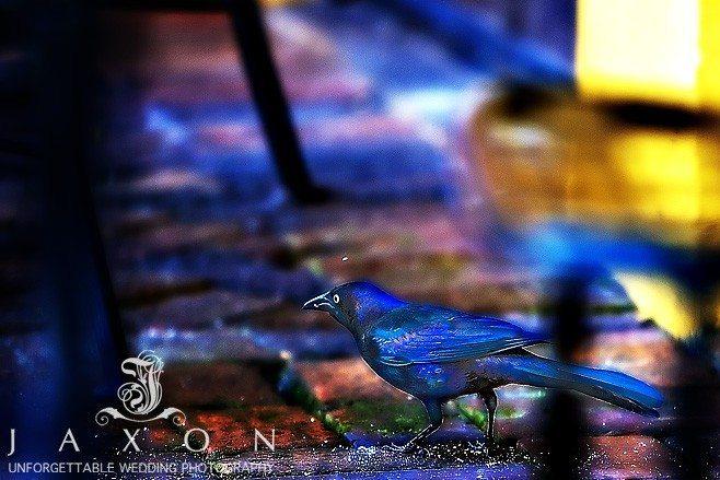a sea bird on the ground under a table
